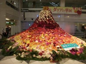 ダリアの華展2013101202